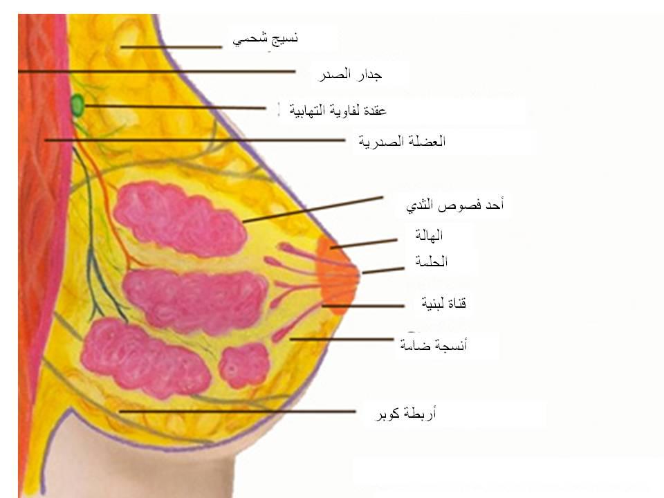 ما تريدين معرفته عن سرطان الثدي اسأل طبيبك